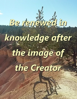 Rooted in the knowledge of our Creator